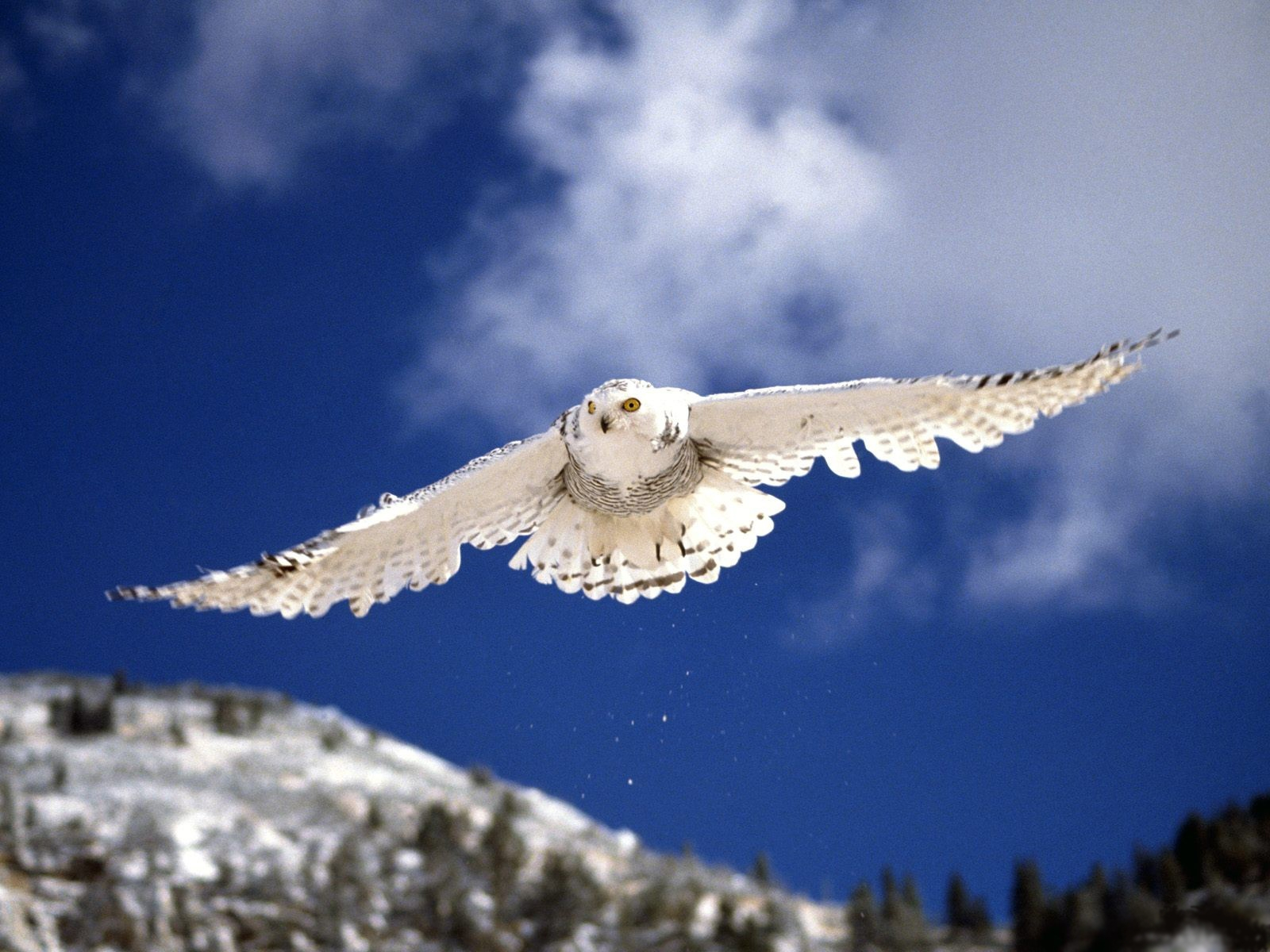 animals in flight wallpaper desk - photo #12